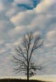 远足云彩的树 免版税库存图片