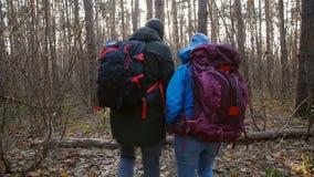 远足和自然旅行的概念 徒步旅行者年轻夫妇在秋天的森林里 股票视频