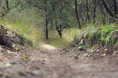 远足和骑自行车的森林足迹 免版税库存照片
