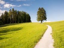 远足在一棵偏僻的树的道路 库存图片