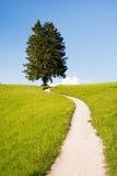 远足在一棵偏僻的树的道路 免版税图库摄影