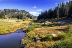 远足在东亚利桑那的高海拔杉木森林里 免版税库存照片