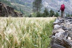 远足在农田里 免版税图库摄影