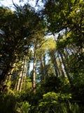 远足在山在森林里 库存图片
