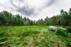远足在挪威森林里 免版税库存图片
