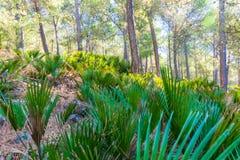 远足在摩洛哥的里夫山脉山在舍夫沙万市下,摩洛哥,非洲 免版税图库摄影
