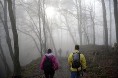 远足在有雾的天自然3的木头 免版税库存图片