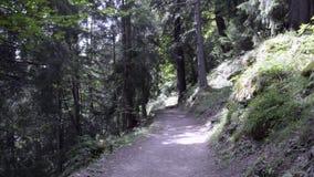 远足在木头的路在阿尔卑斯在夏天 股票录像