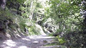 远足在木头的路在阿尔卑斯在夏天 影视素材