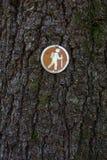 远足在树的定向标志 免版税库存照片