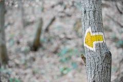 远足在树的黄色箭头标志 库存照片