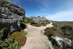 远足在桌山,开普敦,南非 库存照片