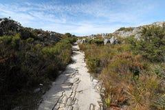 远足在桌山,开普敦,南非 免版税库存照片