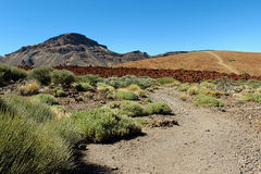 远足在泰德峰国家公园在特内里费岛加那利群岛,西班牙,欧洲 图库摄影