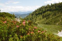 远足在阿尔卑斯 免版税库存照片