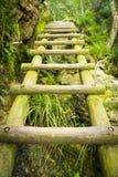远足梯子 库存图片
