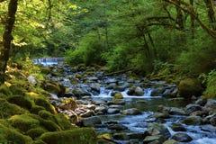 远足沿坦纳小河在哥伦比亚河峡谷 库存图片