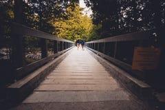 远足沿森林木板走道 库存图片
