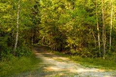 远足的休闲探索一条绿色森林路入有阳光的平安的原野通过叶子夏令时 免版税库存照片