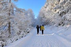 远足的冬天森林 免版税库存图片
