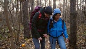 远足的和挑运的概念 年轻人走在森林里的结合旅客在秋天天 股票录像