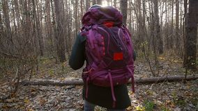 远足的和挑运的概念 徒步旅行者-步行在森林白种人年轻人户外的人本质上 股票视频