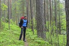 远足者在杉木森林里 免版税库存照片