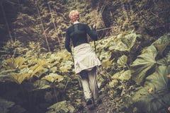 远足者在森林里 库存照片
