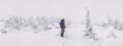 远足者在积雪的森林里 免版税库存照片