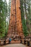 远足者在美洲杉国家公园,加利福尼亚,美国 免版税库存照片