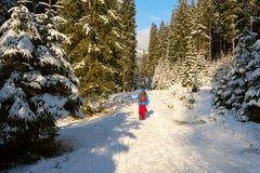 远足者在路走在冬天森林里 库存照片