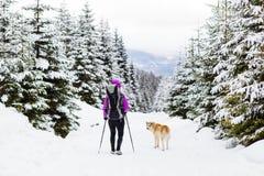 远足走的背包徒步旅行者在有狗的冬天森林里 免版税库存照片