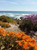 远足足迹在南非 免版税库存照片