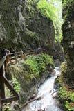 远足通过台阶的Wolfsklamm峡谷 欧洲的阿尔卑斯 PA 免版税图库摄影