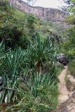 远足通过峡谷在伊萨卢国家公园,马达加斯加 库存照片