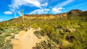远足通过Usery山地方公园半沙漠风景有许多的Saguaru、Cholla和桶式仙人掌的妇女 免版税库存照片
