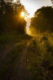 远足道路和日落在美好的森林视图,激动人心的夏天风景在森林走的小径或骑自行车道路,土ro 图库摄影