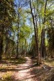 远足道路穿过森林 免版税图库摄影