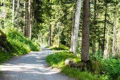 远足道路穿过森林 免版税库存照片