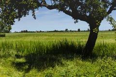 远足GR5足迹在比荷卢三国 库存图片