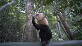连斗帽女大衣猴子在木桥吃 影视素材