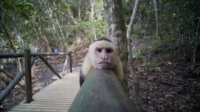 连斗帽女大衣猴子在木桥放松 股票录像