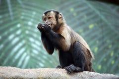 连斗帽女大衣猴子 免版税库存照片
