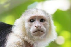 连斗帽女大衣面对猴子白色 免版税库存照片
