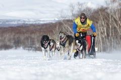 连续拉雪橇狗队堪察加musher Semashkin安德雷 堪察加拉雪橇狗赛跑Beringia,俄国杯拉雪橇狗赛跑雪 免版税库存图片