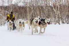 连续拉雪橇狗队 堪察加拉雪橇狗赛跑Beringia,俄语 库存照片
