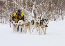 连续拉雪橇狗队 堪察加拉雪橇狗赛跑Beringia 免版税图库摄影