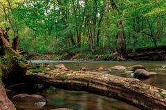 连续河在北卡罗来纳 免版税库存图片