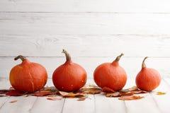 连续红色日本南瓜,假日装饰 免版税库存图片