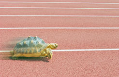 连续草龟 免版税图库摄影
